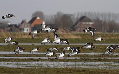 Boerenlandvogelbalans 2020