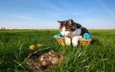 Kattenactie in weidevogelkerngebieden