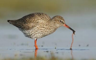 Volop aan de slag voor een waardevol weidevogellandschap