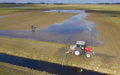 Steeds meer boeren maken land nat voor weidevogels