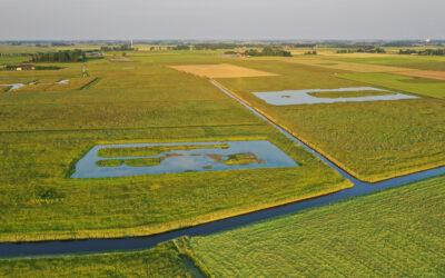 Goed weidevogelseizoen bij boeren Collectief Groningen West